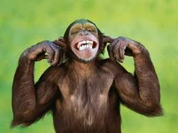 Chimp not listening